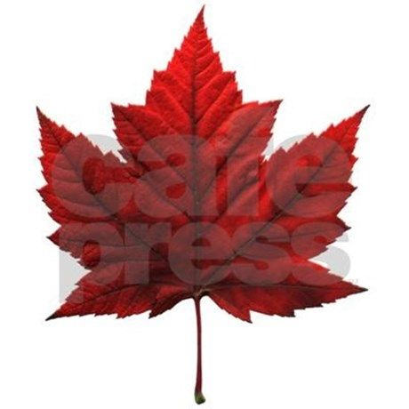 Canada Decal Canada Maple Leaf Souvenir Decal Maple Leaf Art Maple Tree Tattoos Maple Leaf Tattoos