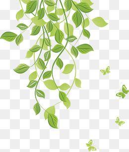 As Plantas Cartoon Plantas Moldura Imagem Png E Psd Para Download Gratuito Free Watercolor Flowers Flower Png Images Vine Drawing