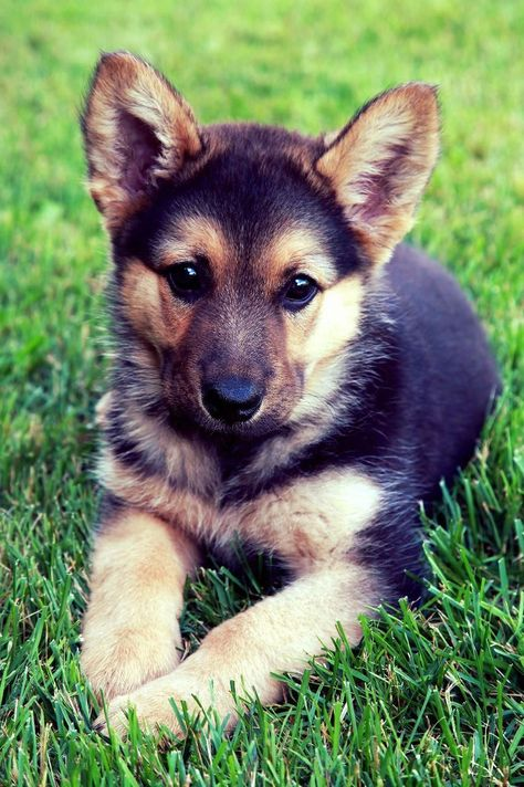 Dog Obedience Training Advice Dogtrainingparko Puppy