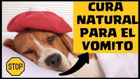 49 Ideas De La Salud De Tu Perro En 2021 Perros Mascotas Pulgas Perros