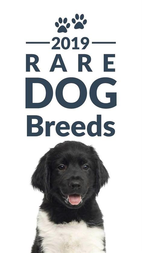 Dog Training Dog Training Treats Made In Usa Only Dog Training