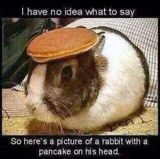 Pin By My Info On Animal Funnies Cheer Someone Up Cheer Up Funny Cheer Up Friends