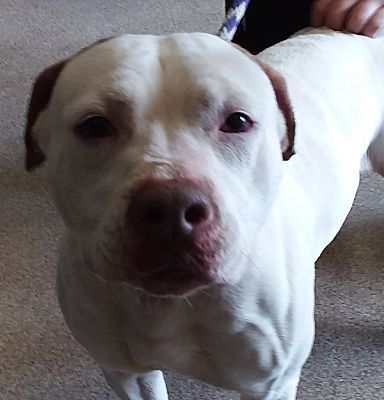 Pin On Will You Adopt Me Signed Rescue Pet