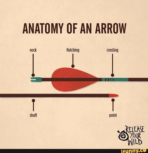 Tips for Archery Fishing Archery Tips, Archery Hunting, Crossbow Hunting, Archery Targets, Deer Hunting, Bow Hunting Tips, Archery Range, Survival Tips, Survival Skills