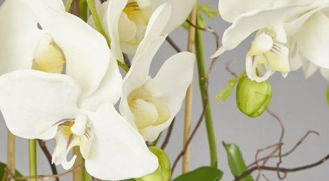 Beautiful white phalaenopsis orchid plant, planted in a large round stone matt black globe vase finished with black bamboo and black ribbons. #artificialflowers #artificialorchids #artificialflowers #artificialorchids #artificialplants #artificialgreenery #interiordesign