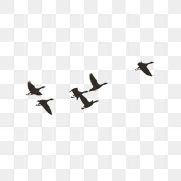 A Group Of Chinese Style Ink Birds Group Chinese Style Flying Bird Png Transparent Clipart Image And Psd File For Free Download In 2021 Flying Bird Silhouette Frame Border Design Birds Flying