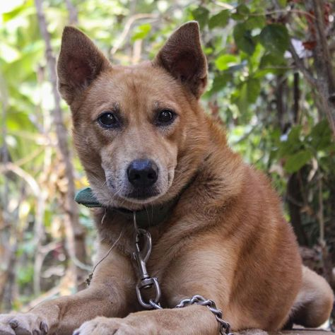 Every dog must have his Day!... #dog #dogsofinstagram #dogs #puppy #dogstagram #instadog #pet #doglover #love #dogoftheday #cute #doglovers #instagram #pets #of #puppylove #doggo #puppies #cat #doglife #puppiesofinstagram #ilovemydog #dogsofinsta #animals #hund #doggy #petstagram #k #animal