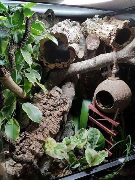 Lepord Gecko, Leopard Gecko Cute, Leopard Gecko Habitat, Leopard Gecko Terrarium, Snake Terrarium, Chameleon Terrarium, Tree Frog Terrarium, Reptile Habitat, Reptile House