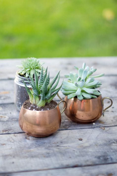 Perfect. Little succulents in single containers. These brass vintage cups are cute-- or simple white stone pots