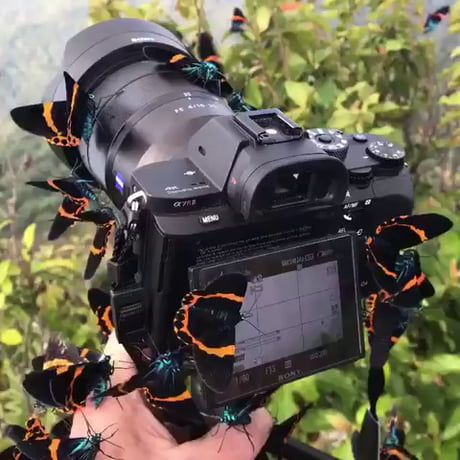 Butterfly paradise in Kampot, Cambodia