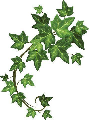 Aka Ivy Leaf Clipart Free Clip Art Images Free Clip Art Leaf Clipart Clip Art