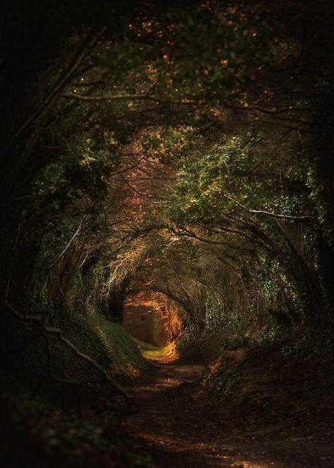Conceptual Photography, Dark Photography, Landscape Photography, Mysterious Photography, Aesthetic Photography Nature, Scenery Photography, Fae Aesthetic, Dark Green Aesthetic, Salvador Dali
