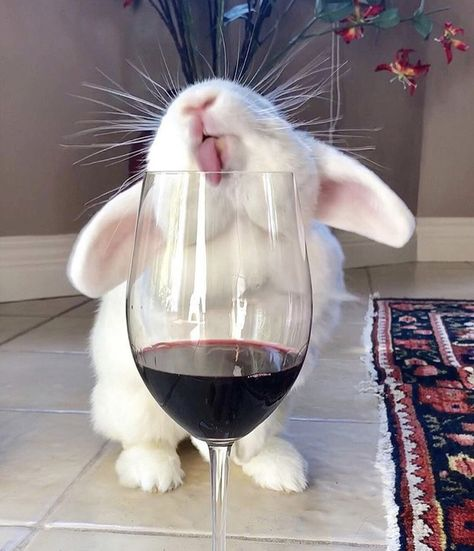 No wine for bunny! No wine for bunny!