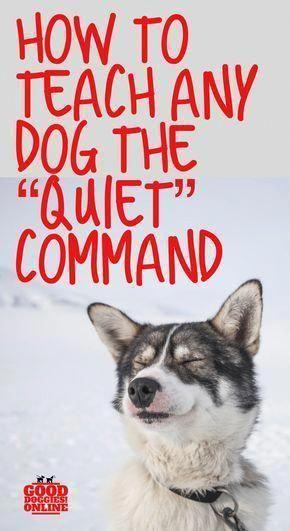 Dog Training Online Take Care Of The News Regarding Pet Food