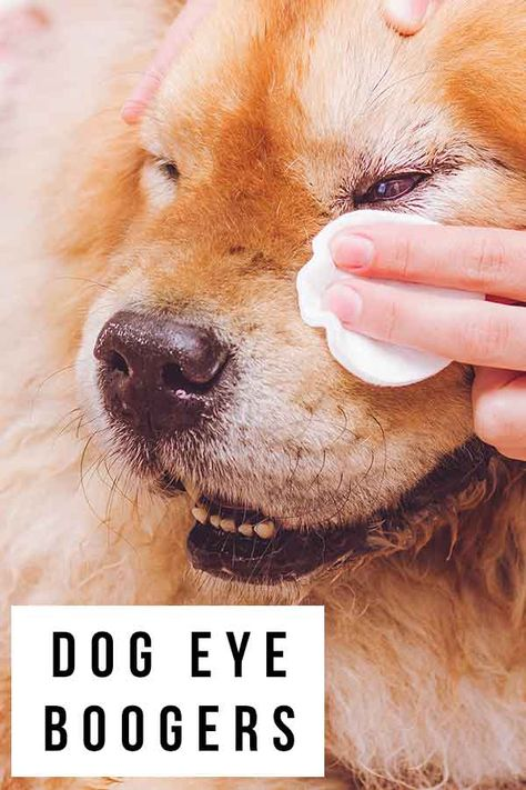 764cf679161800728528346997f17a22 - How To Get Eye Boogers Out Of Dog S Eyes
