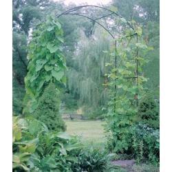 Rosenbogen Sudborough In 2020 Rosenbogen Garten Hochbeet Und Torbogen