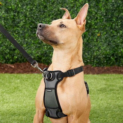 Frisco Padded No Pull Front Lead Dog Harness Black 16 22 In
