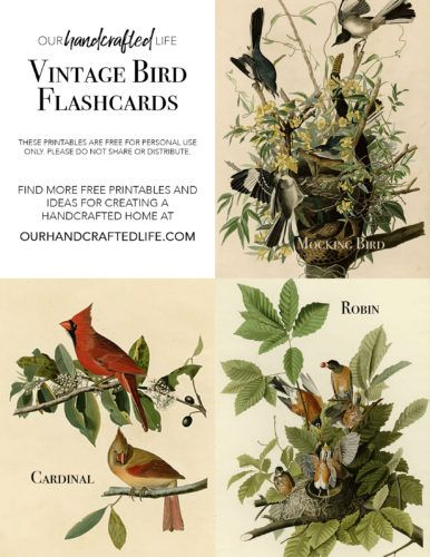 Encourage kids to explore and discover the world around them with these Vintage Inspired Science and Nature Flash Cards. If you are homeschooling or unschooling, these vintage Science flash cards would work perfectly with the Charlotte Mason curriculum or really any science and nature study. This homeschool idea is perfect for elementary students of all ages. Download and print bird, leaf and tree, and flower flash cards for kids. Vintage Science and Nature Flash Cards - Our Handcrafted Life