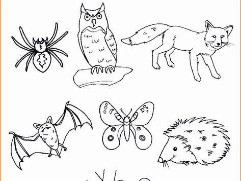 List Of Pinterest Animali Disegni Facili Pictures Pinterest