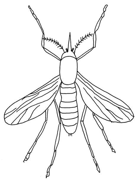 insekten malvorlagen zum ausdrucken
