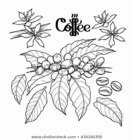 Coffee Bean Plant Coloring Pages A Coffee Bean Is A Seed Of The Coffee Plant And The Source Coffee Plant Coffee Watercolor Coloring Pages