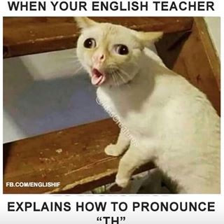 Esl Warm Up Activities With Powerpoint Download Cute Cat Memes Cute Animal Memes Funny Animal Jokes