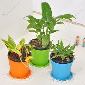 Air Purifying Plants Packs Online