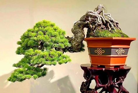 500 Ŝ'藝 Ideas Bonsai Tree Bonsai Bonsai Art