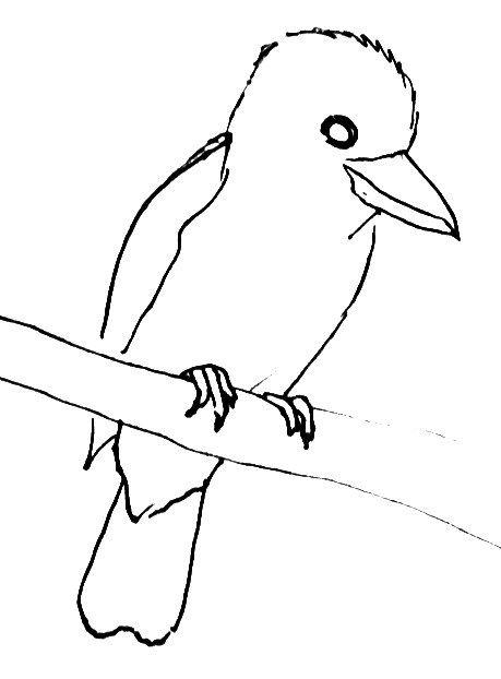 How To Draw A Kingfisher Kookaburra Drawings Animal Drawings