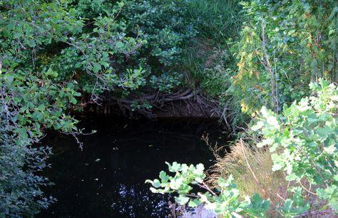 Treeroots on the riverbank