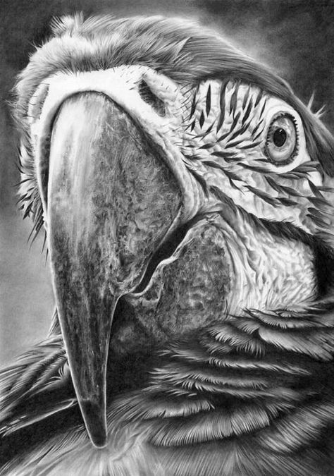 Pencil Drawings Of Animals, Bird Drawings, Drawing Sketches, Realistic Drawings Of Animals, Hyper Realistic Paintings, Scratchboard, Amazing Drawings, Pencil Portrait, Portrait Art