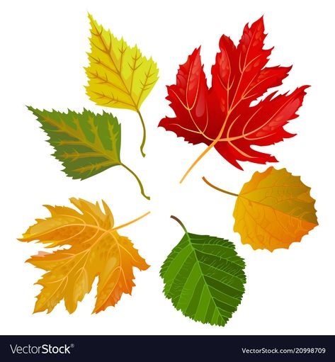 Autumn colorful leaves from maple and oak trees