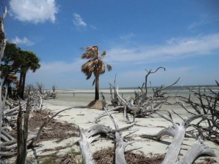 South Beach Ossabaw Island