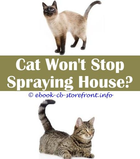what color is cat spray