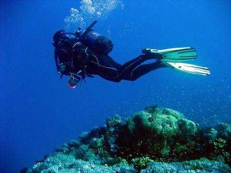 7 best SCUBA Diving in the Mafia Island Marine Park images on - marine biologist job description