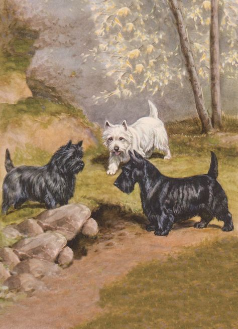 SCOTTISH AND WESTIE TERRIER DOGS CHARMING DOG PRINT MOUNTED READY TO FRAME