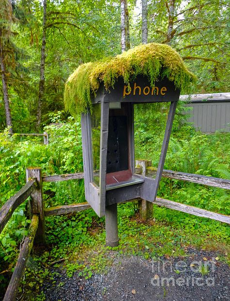 Moss Covered Phone Booth - Hoh Rain Forest, Washington