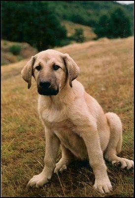 Pin En Gossos Dogs Perros