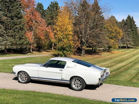 1967 Ford Mustang Supersnake Ford Mustang Forsale Canada