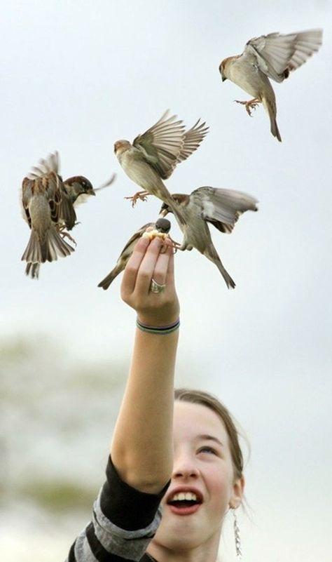 разместился фото с птицами и люди гадюк