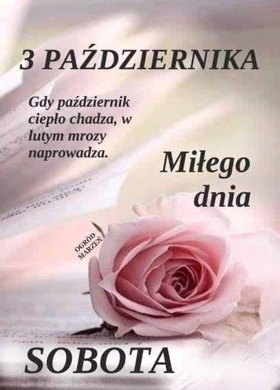 Pin By Maria Samorukoff On Sobota Good Morning Flowers Rose