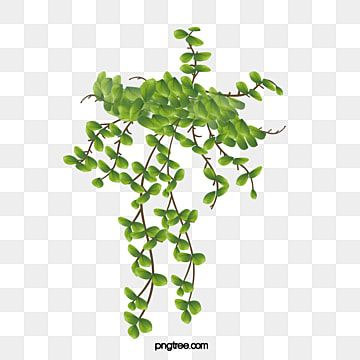 Green Vines Vine Clipart Green Vine Png Transparent Clipart Image And Psd File For Free Download Green Grass Background Vines Clip Art
