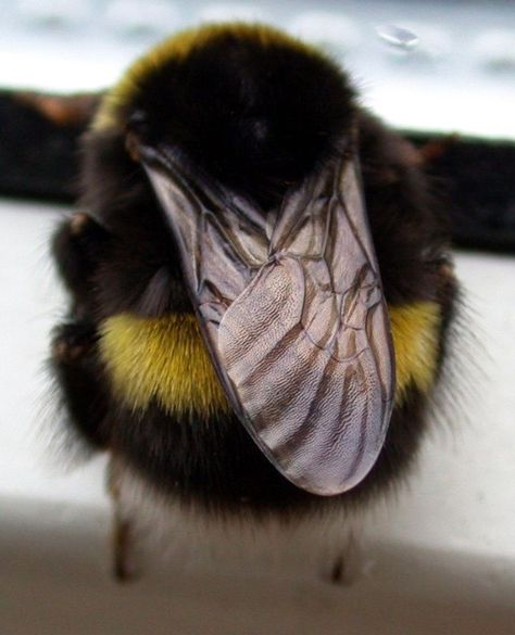Animals And Pets, Baby Animals, Funny Animals, Cute Animals, Wild Animals, Stupid Animals, Beautiful Creatures, Animals Beautiful, Buzzy Bee
