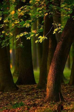 Image Result For Garden Blur Background Hd Photoshop Backgrounds Free Photoshop Digital Background Dslr Background Images