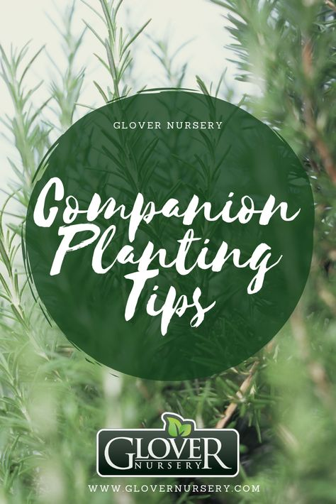 Companion Planting Tips From Glover