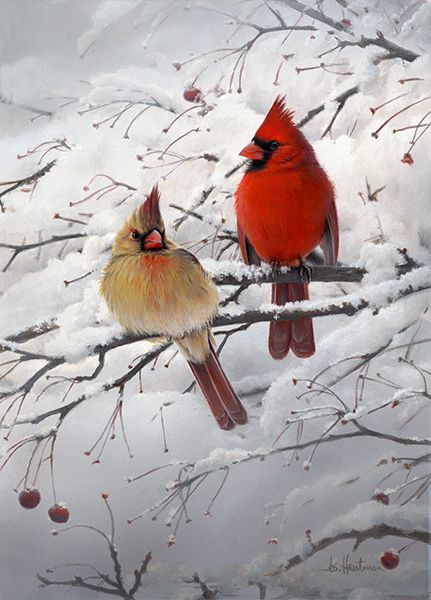 Cardinal Pair on a Snow Day Pretty Birds, Love Birds, Beautiful Birds, Animals Beautiful, Animals And Pets, Cute Animals, State Birds, Cardinal Birds, Bird Pictures