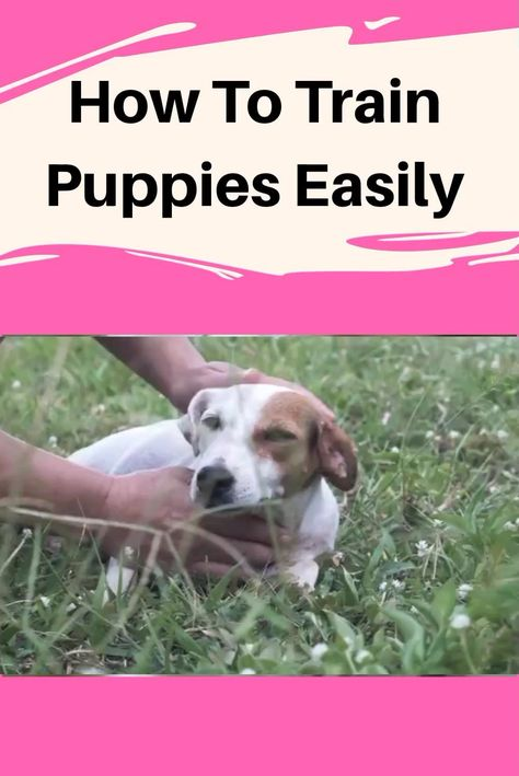 are you interested in to train your dog or small puppies obedience, service therapy,behavior training, jumping, potty and barking tips and many more things and want to command them by playing simple games with them Here are cool dog tricks and games you can teach a dog today and show them off to your friends and family #puppy #dog #dogcalm #pet #puppies #mypuppystory#dogtraining #puppytraining#dogtrainingadvicetips #dogbehavior #dogtraining #dogobedience #dogtrainingtips #dogtips