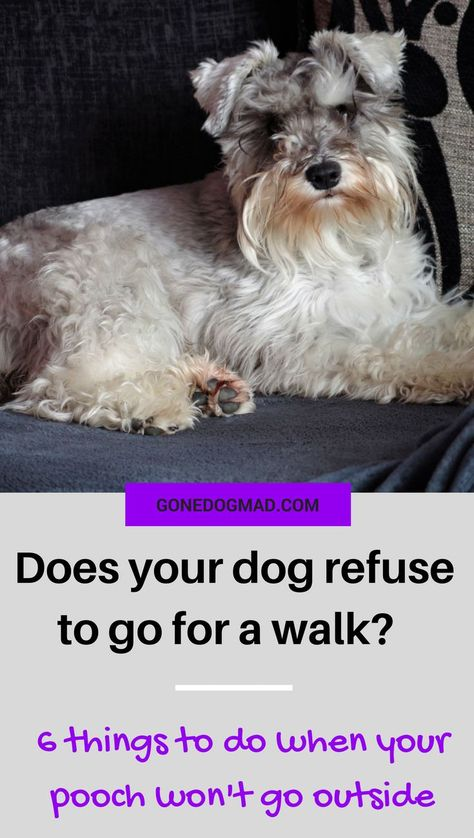 6 Things To Do When Your Dog Refuses To Go For A Walk Your Dog