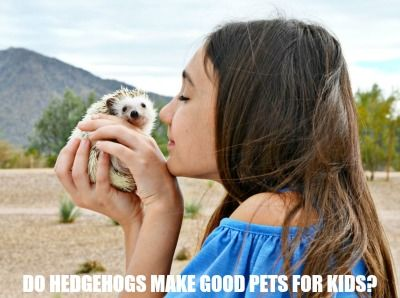 Do Hedgehogs Make Good Pets For Kids With Images Best Pets For Kids French Vanilla Frappe Recipe Animals For Kids