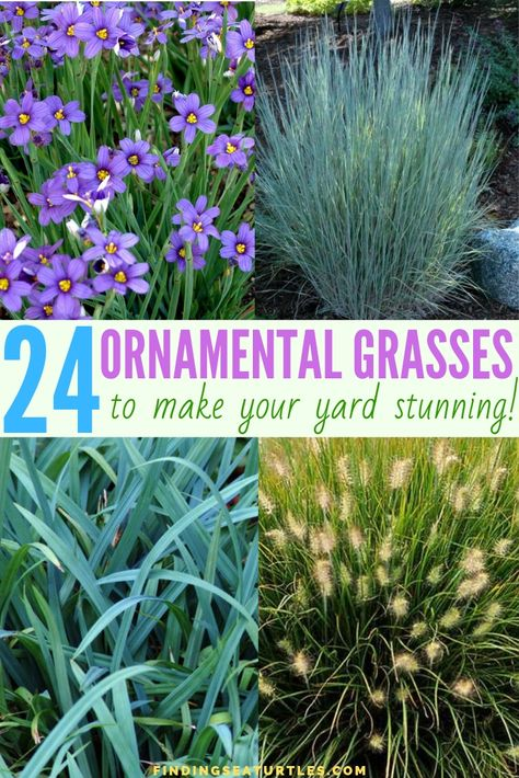 24 Best Ornamental Grasses - Finding Sea Turtles : 24 Ornamental Grasses To Make Your Yard Stunning Looking for plants to help with garden issues, think about Ornamental Grasses. Something easy to grow and maintain? Plants with year round interest. Ornamental Grass Landscape, Landscape Curbing, Ornamental Grasses For Shade, Landscape Grasses, Landscaping Plants, Front Yard Landscaping, Corner Landscaping Ideas, Hillside Landscaping, Landscaping Company
